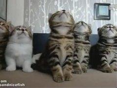 如果你想买猫咪的话,来这里看看挑选详