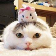 一直大懒喵懒猫~
