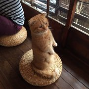 猫咪咖啡店