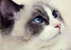 一个养猫大神的口述:养猫备忘录