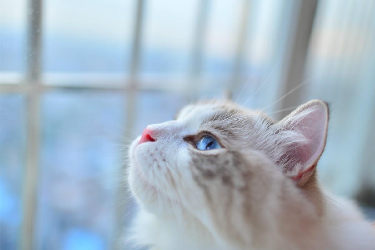 壁纸 动物 猫 猫咪 鸟 鸟类 雀 小猫 桌面 1200_799