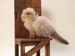 猫爬架有什么特点和功能