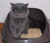 猫砂种类太多不好区分?爱喵咪来帮您