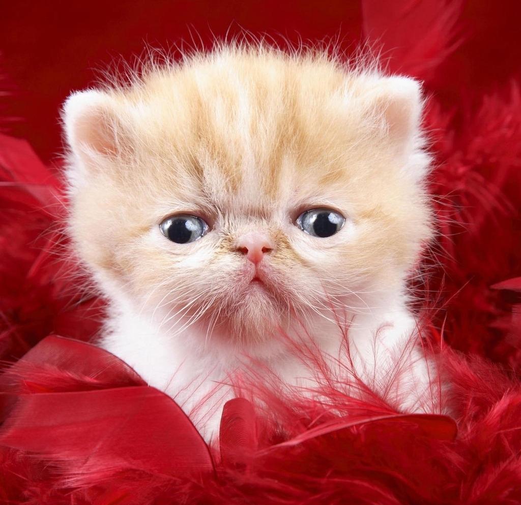 你不得不知道的十大治疗猫咪生病的小偏方