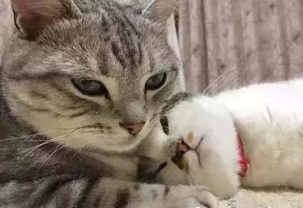 拒绝秀恩爱拒绝虐狗行为直到看到这两只猫之后_爱喵咪