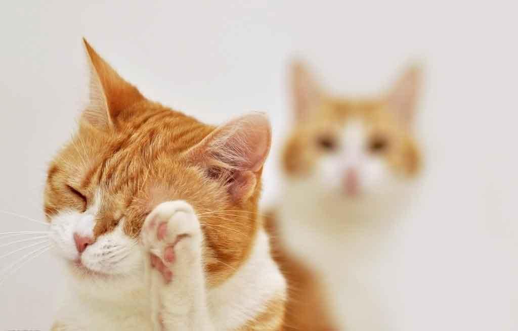 """一个小孩子傻傻的问妈妈说:""""妈妈,猫咪为什么要舔它的爪子啊?"""