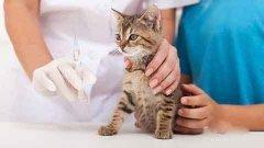 猫咪疫苗全知道,真菌病菌苗相关知识