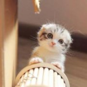 猫咪不爱喝水怎么办?