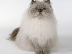 怎么训练猫咪在猫砂盆里大小便
