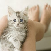 如何让猫咪学会开门