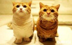 怎么养出温顺的猫咪?