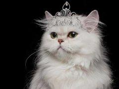 如何挑选到一只喜欢的猫咪