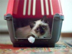去私人家庭购买猫咪需要注意哪些