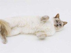 如何延长猫咪的寿命